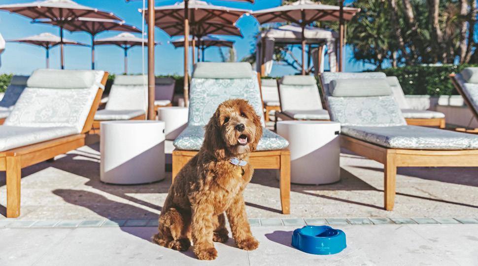 pet friendly hotels vail